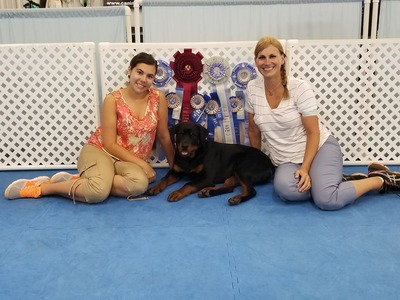 ICKC Puppy Champion